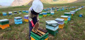 زنبوردار موفق