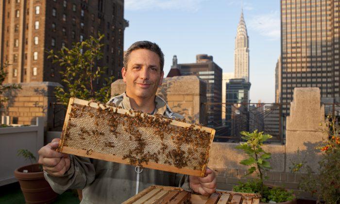 زنبورداری در شهر