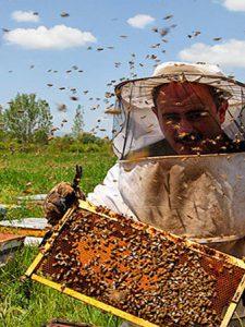 زنبوردار خوب