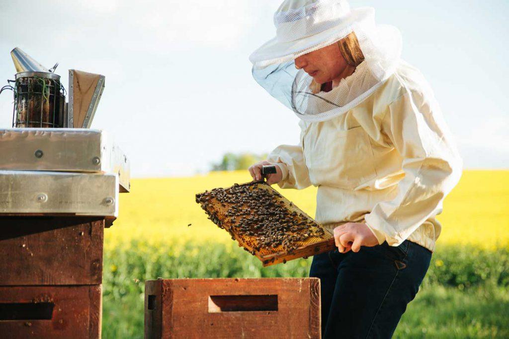 زنبورداری یک خانم