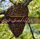 زنبور عسل قرآن