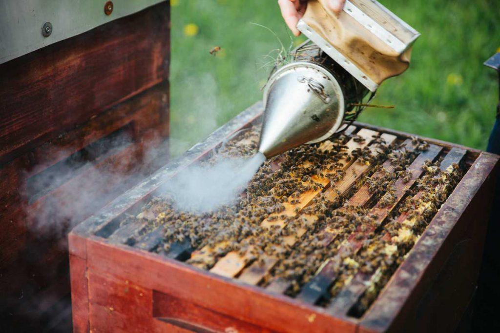 دود دادن زنبور
