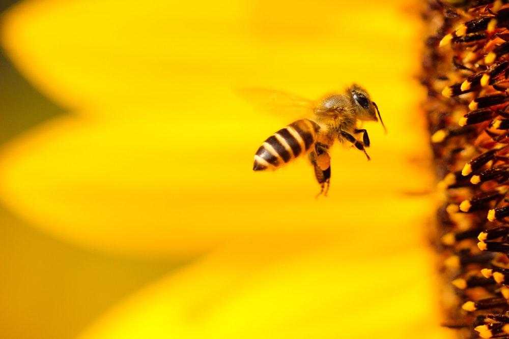 خدا وحی به زنبور عسل